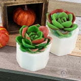 Fall Succulent Soap Gift Box : Set of 2
