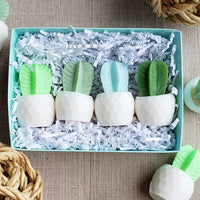 Mini Soap Cactus Gift Box www.sunbasilsoap.com