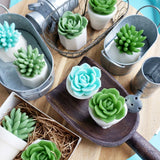 Succulent Soaps - Set of 3 soap succulents at Sunbasil Soap