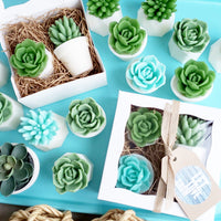 Let Love Grow Succulent Soap Gift Set handmade baby shower gift at Sunbasil Soap