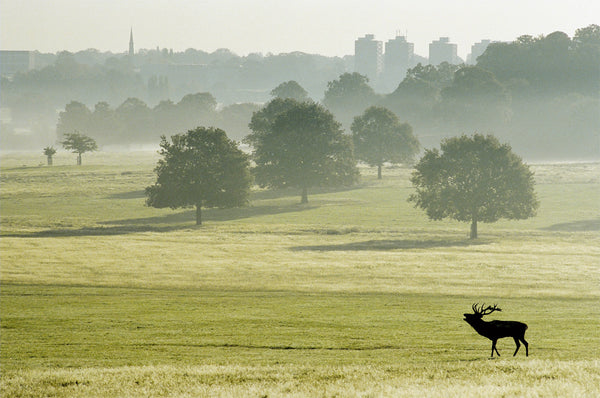 Sunrise Over Roehampton Skyline - Richmond Park - Surrey
