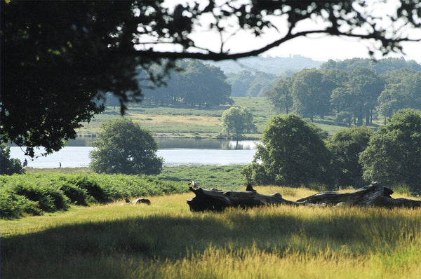 Upper Pen Pond - Richmond Park - Surrey