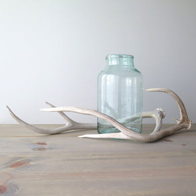 Weathered Axis Deer Antlers