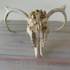 Weathered White Tail Deer Skull with Antlers