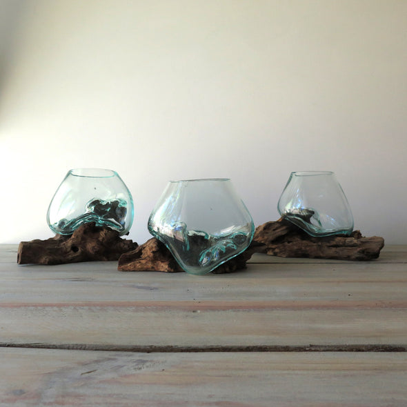 Glass on Driftwood Terrariums