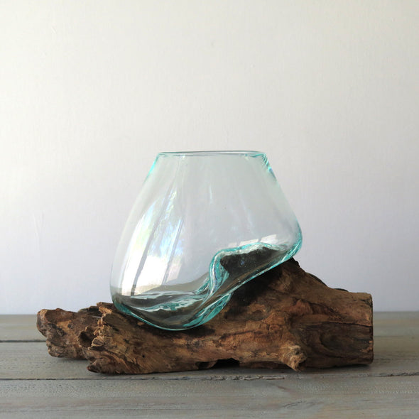 Glass on Driftwood Terrarium