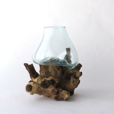 Glass on Driftwood Terarrium II