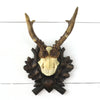 Vintage Black Forest Roe Deer Mount