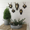 Vintage Black Forest Roe Deer Mount Vignette