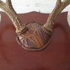 Vintage White Tail Deer Mounted Antlers with Engraved Leather Cover