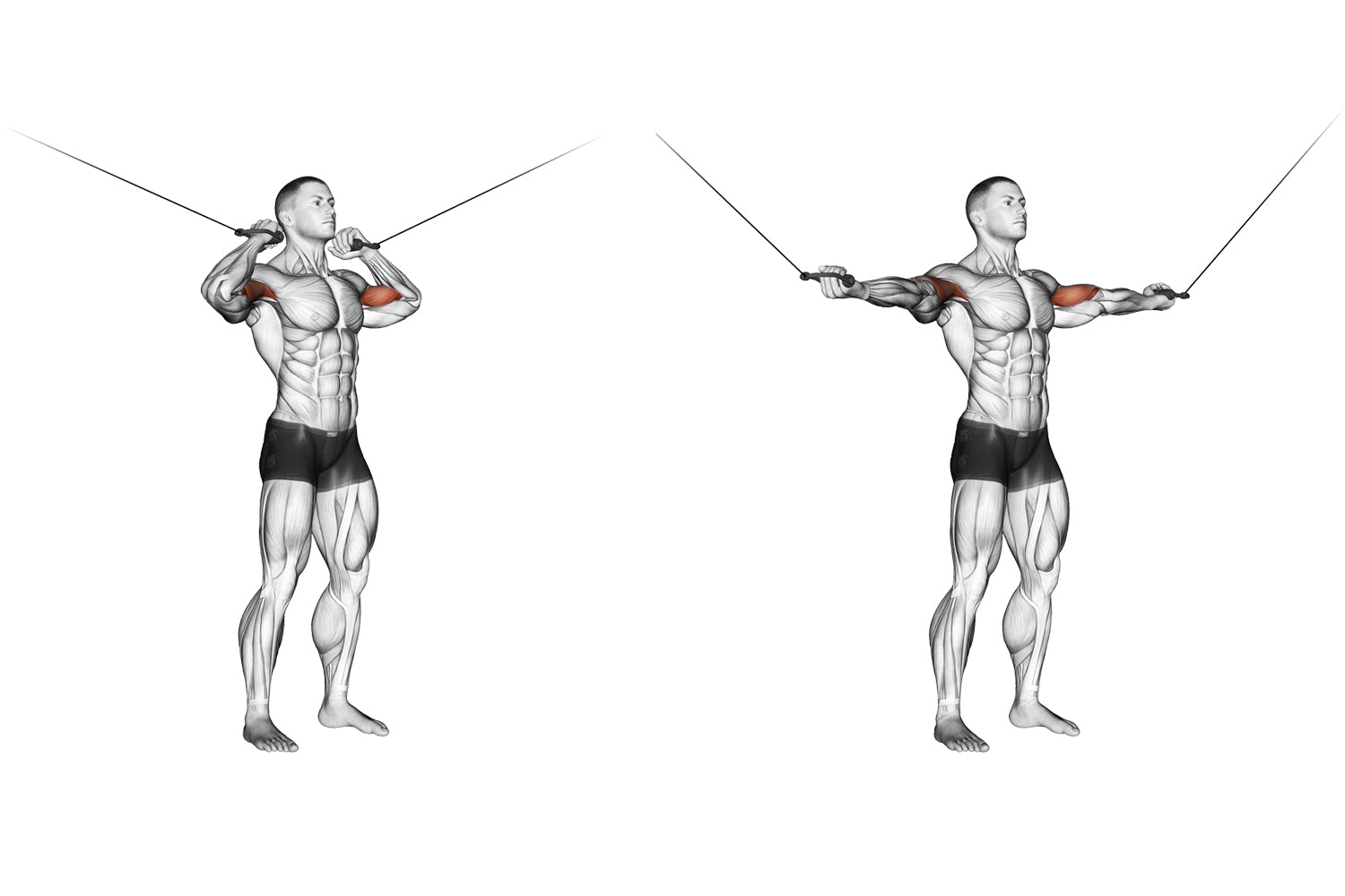 Standing overhead cable bicep curl exercise