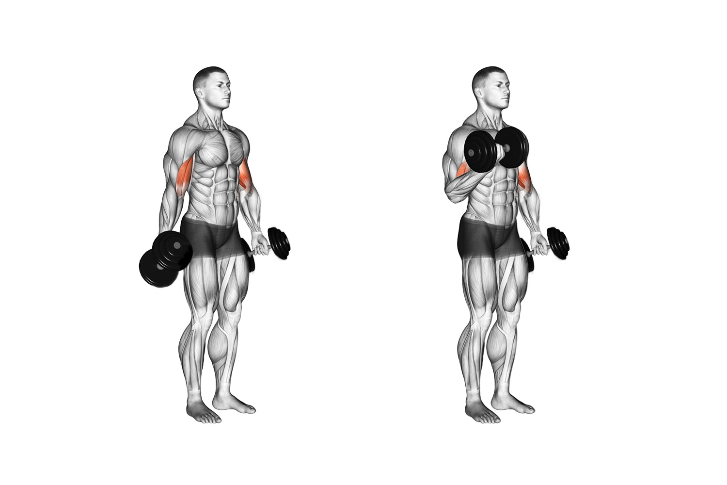Alternate arm standing bicep curls exercise