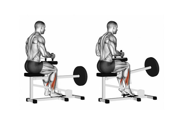 seated calf raises exercise instructions with illustrations