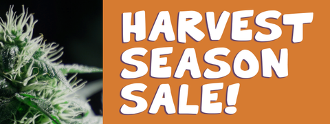Harvest Season Sale