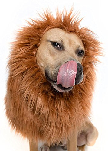 Lion Mane costume for large dogs - Dogs Make Me Happy - 1