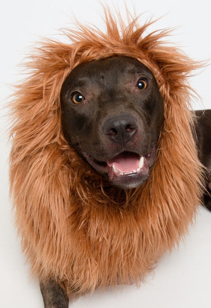 Lion Mane costume for large dogs - Dogs Make Me Happy - 2