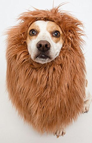 Lion Mane costume for large dogs - Dogs Make Me Happy - 3