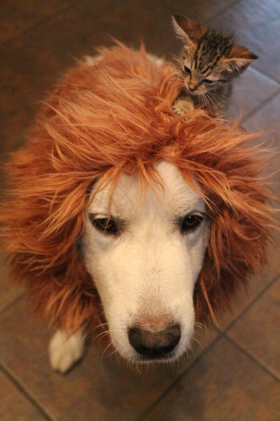 Lion Mane costume for large dogs - Dogs Make Me Happy - 5