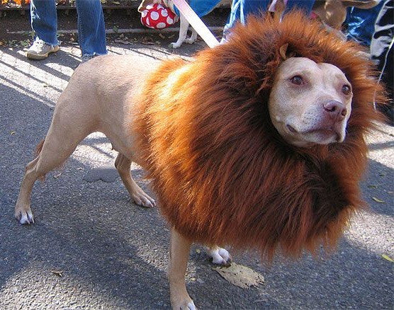 how to make a lion mane for dog