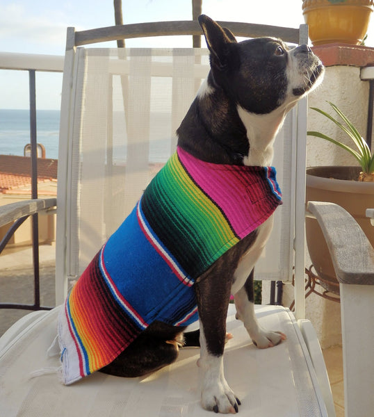 Handmade dog poncho - Wear as costume or for warmth - Dogs Make Me Happy - 1