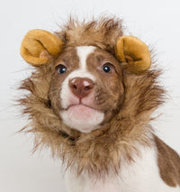 Lion Mane costume for small dogs - Dogs Make Me Happy - 2