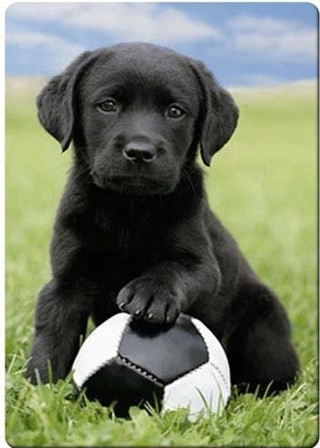 Soccer labrador magnet - Dogs Make Me Happy