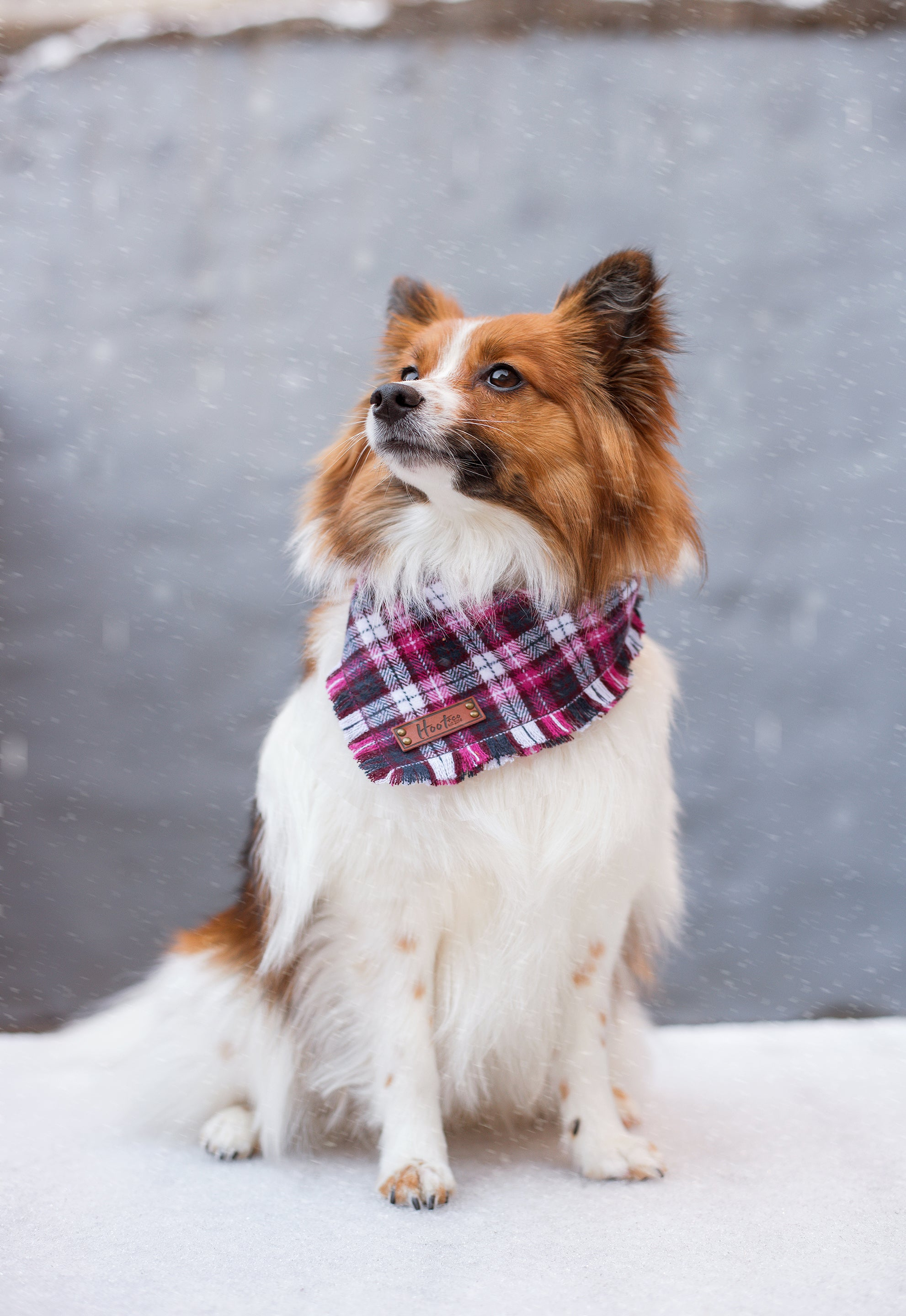 Cora Frayed Dog Bandana