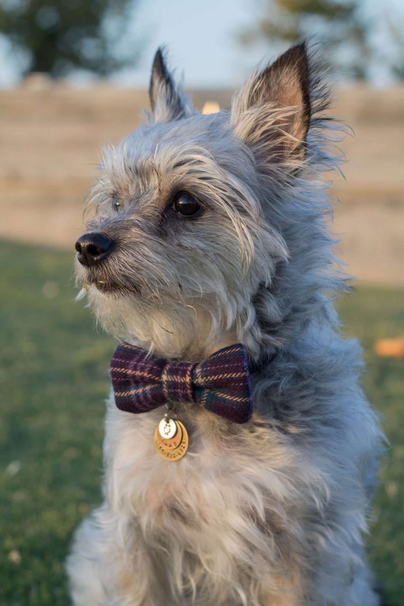 Lady Flannel Bow Tie