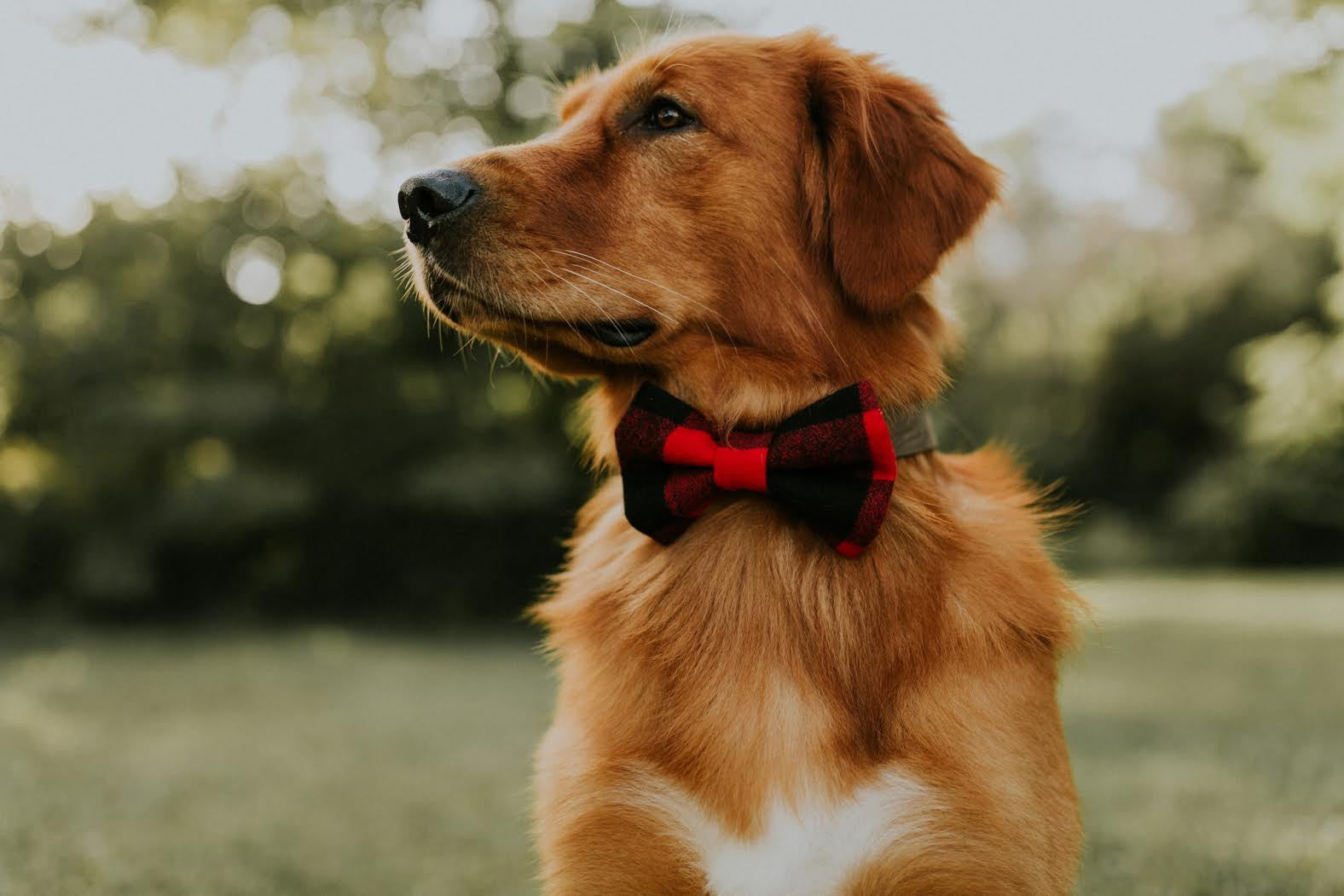 Finley Flannel Bow Tie
