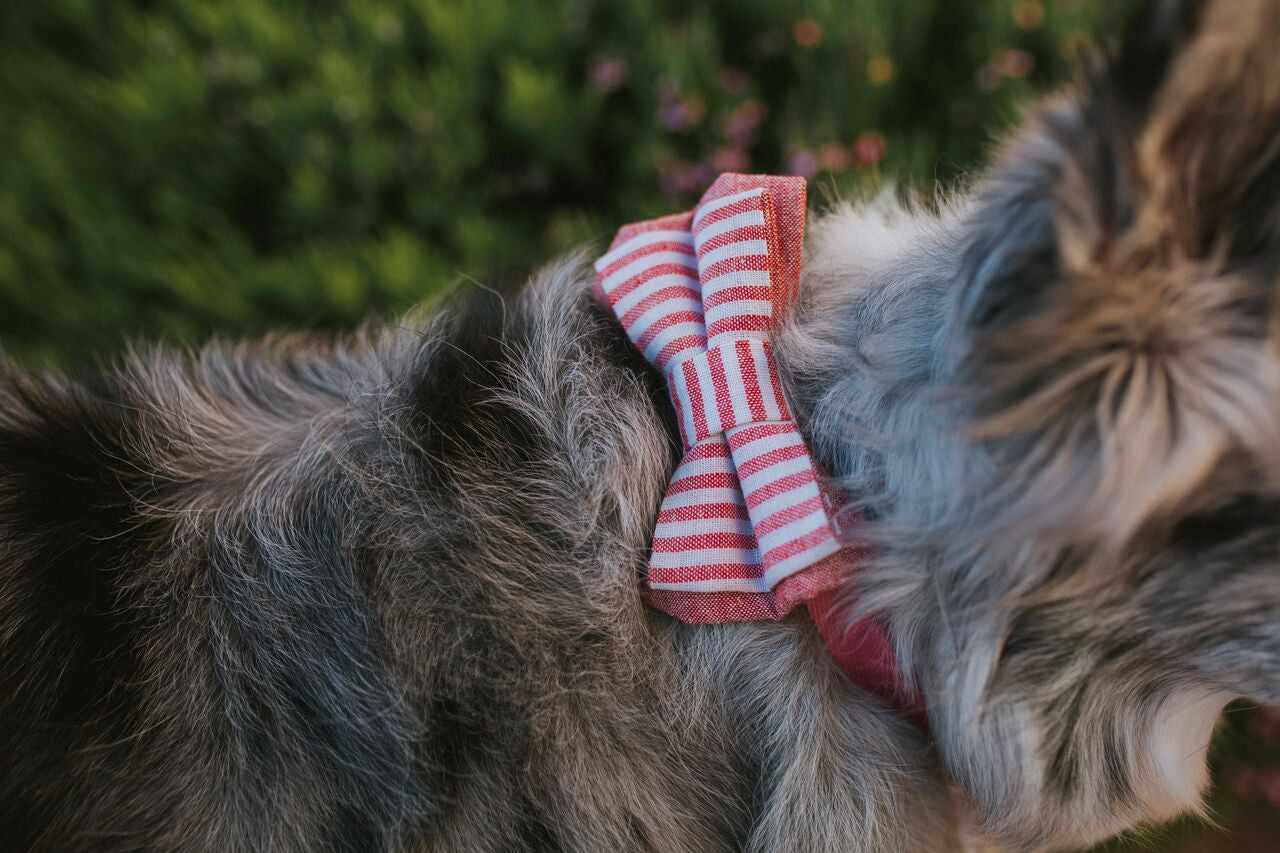 Lane Linen Red Bow Tie