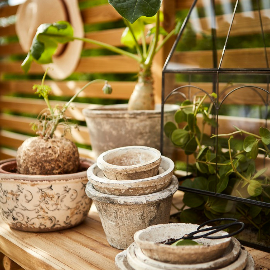 Spring nordic home garden and plants