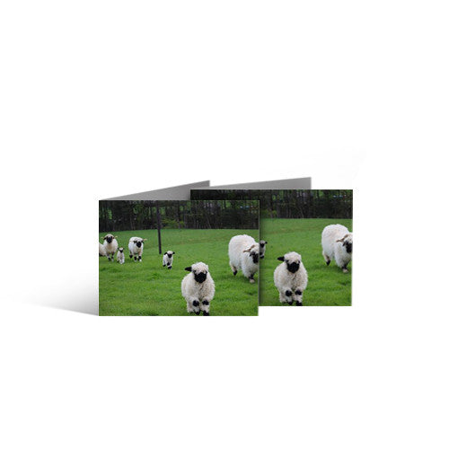 Pack of 5 Greeting Cards - Ewes and Lambs