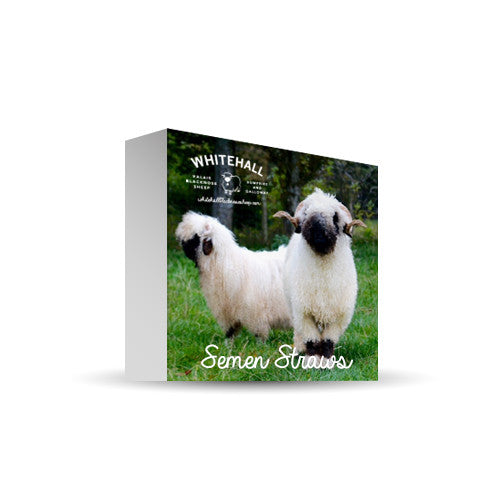 Valais Blacknose Sheep Semen Straws