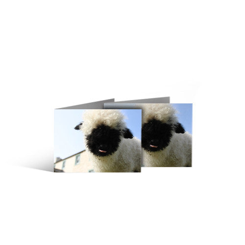 Pack of 5 Greeting Cards - Claude