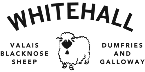 Whitehall Valais Blacknose Sheep