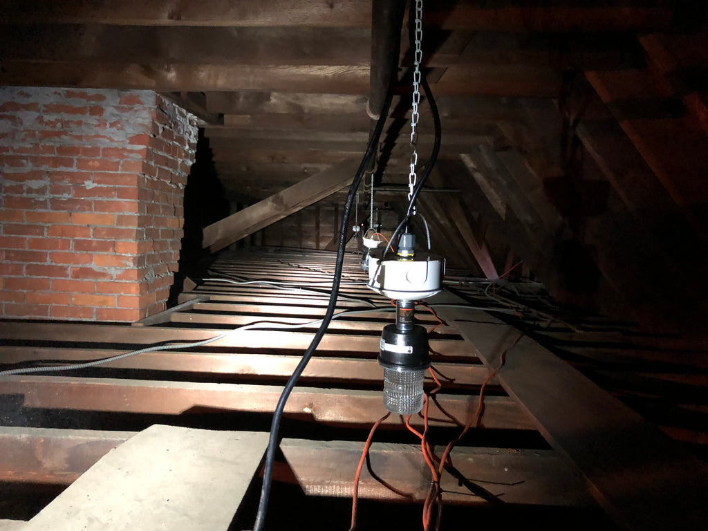 Learn How to Get Rid of Squirrels in Attics & Crawlspaces