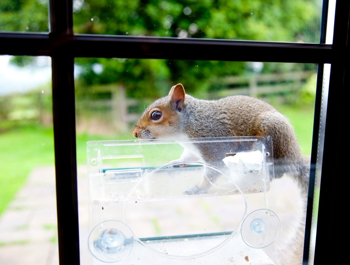 Feeding Birds can also feed nearby squirrels if bird feeders are easily accessible.