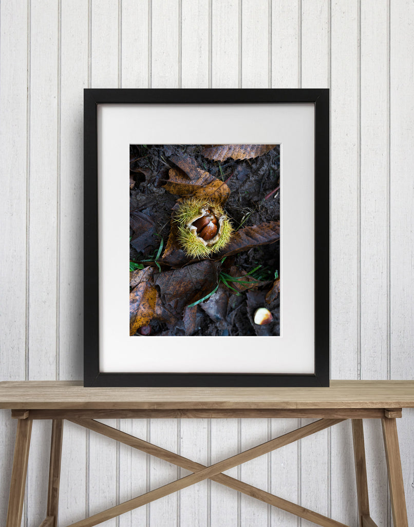Conker in the Autumn
