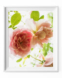 Roses in the Summer - Fawn. Interior Design Studio.