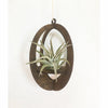 Oval Walnut Air Plant Hanger