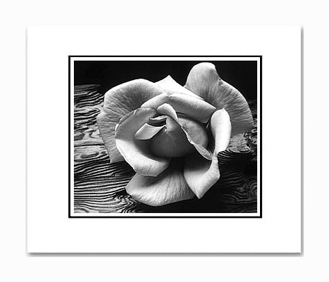 Ansel Adams Rose & Driftwood, San Francisco Matted Reproduction