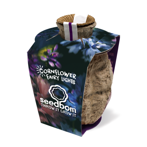 Cornflower Fairy Light - Seedbom - Braw Wee Emporium