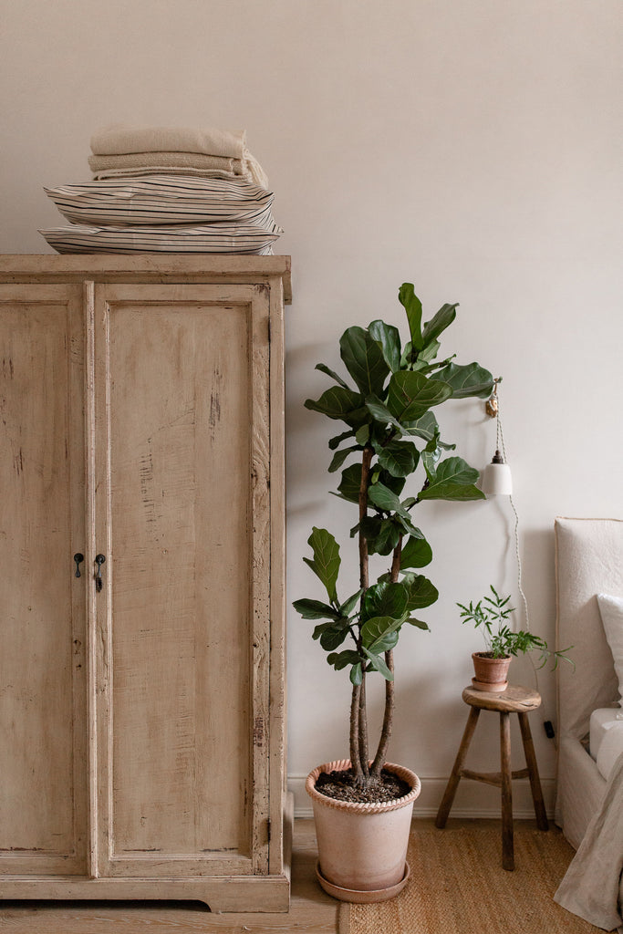 fig plant and vintage wardrobe