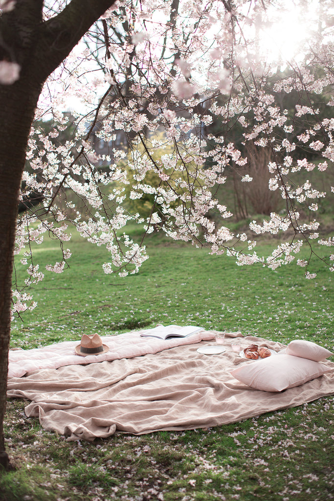 picnic under a cherry blossom tree