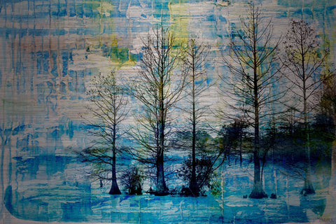 Fir Trees Blue