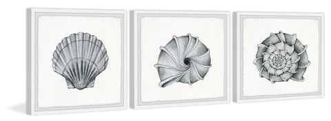 Pretty Shells Triptych