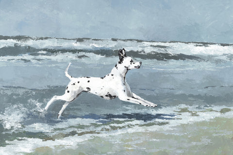 Splashing Dalmatian