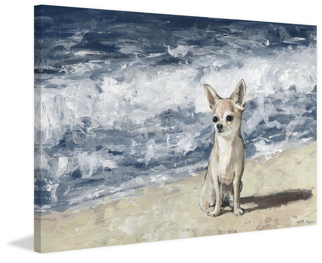 Chihuahua by the Beach