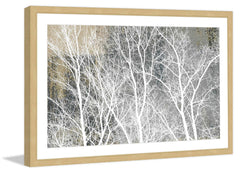 Frosty White Branches