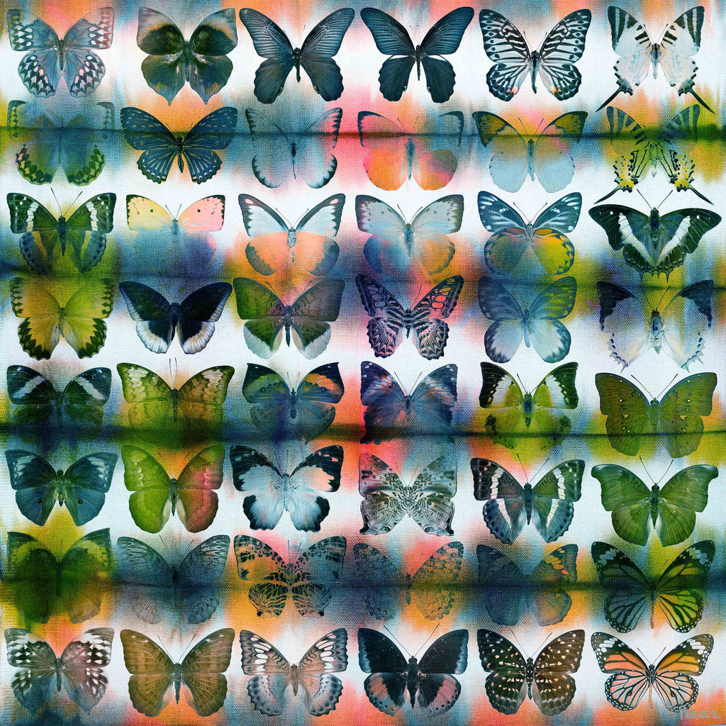Butterflies Squared